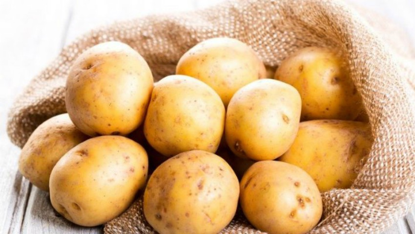 Foto: Peste 1.000 de tone de cartofi infestați au fost opriți în portul Constanţa