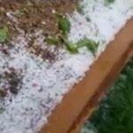 Foto: O ploaie cu grindină a făcut prăpăd în nordul țării