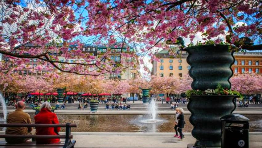 Foto: Cele mai impresionante poze cu flori de cireș din diferite orașe ale lumii