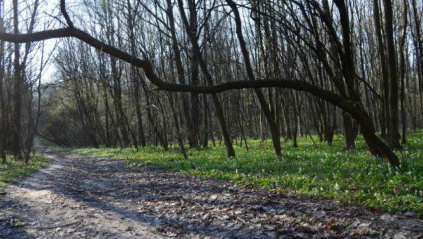 Foto: Doi tineri, de 15 şi 17 ani, din satul Unțești au fost ucişi cu sânge rece şi îngropaţi într-o pădure