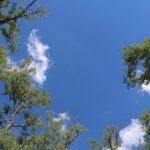 Foto: O pădure va fi plantată pe malul Prutului, în regiunea Leușeni
