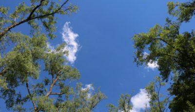 O pădure va fi plantată pe malul Prutului, în regiunea Leușeni