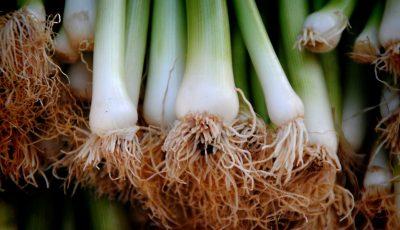 Ceapa verde, leguma care alungă microbii și mănâncă zahărul din organism