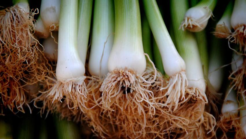 Foto: Ceapa verde, leguma care alungă microbii și mănâncă zahărul din organism