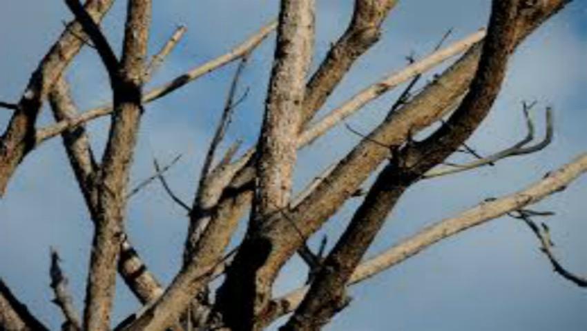 Foto: O femeie de 34 de ani și-a pierdut viața după ce a căzut dintr-un copac