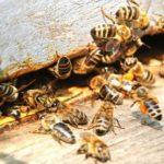 Foto: Alertă! Doi oameni au murit, iar altul este în şoc anafilactic după ce au fost atacaţi de albine