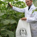 Foto: ANSA verifică nivelurile de nitrați și pesticide din legumele de producție autohtonă