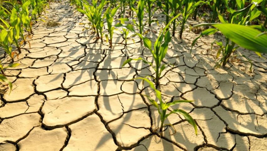 Foto: Meteorologii au emis Cod galben de secetă în Moldova. Vezi până când!