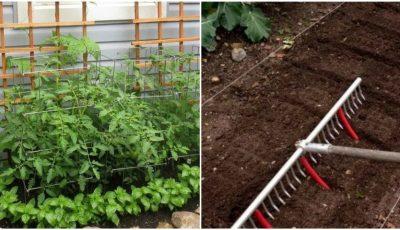 Află câteva sfaturi utile care îți vor transforma grădinăritul într-o activitate ușoară și plăcută