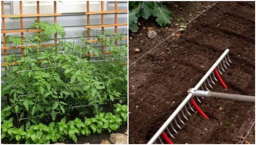 Foto: Află câteva sfaturi utile care îți vor transforma grădinăritul într-o activitate ușoară și plăcută