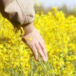 Foto: Uniunea Europeană interzice utilizarea unor pesticide toxice, pentru a salva albinile