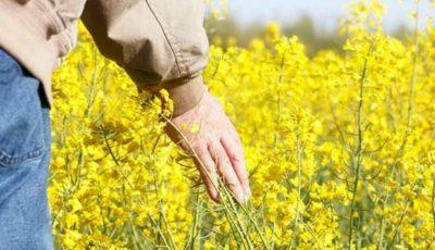 Uniunea Europeană interzice utilizarea unor pesticide toxice, pentru a salva albinile