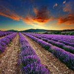 Foto: Plimbări pentru suflet în Provence. Lista câmpurilor de levănțică în Moldova