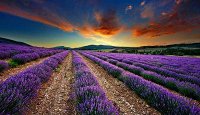 Plimbări pentru suflet în Provence. Lista câmpurilor de levănțică în Moldova