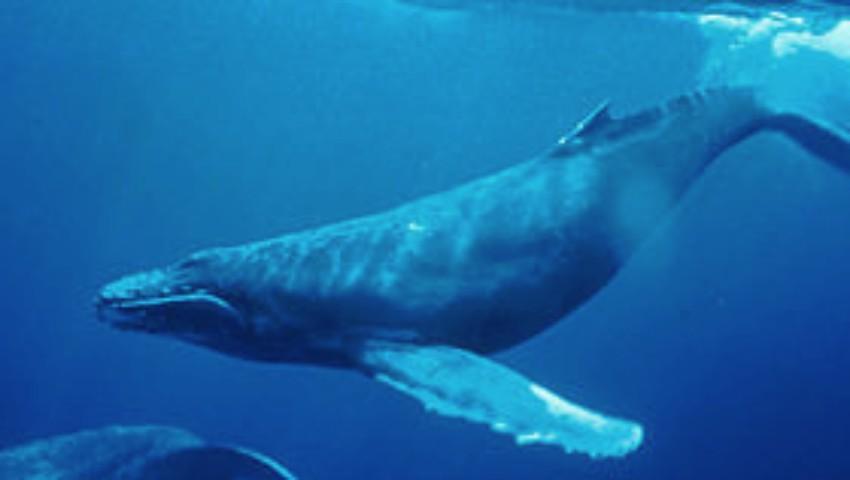 Foto: O balenă a fost găsită moartă pe malul oceanului. Avea 8 kg de pungi de plastic în stomac