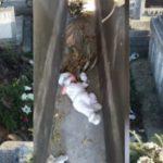 Foto: O mamă nemiloasă și-a abandonat bebelușul de două luni în cimitir, printre morminte