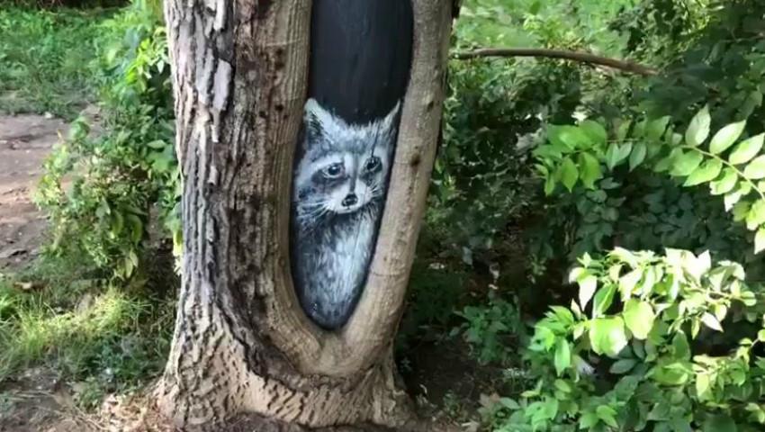 Foto: Video. O pictură deosebită a apărut pe tulpina unui arbore din Capitală