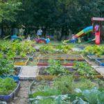 Foto: În curtea unei grădinițe din Capitală, copiii au răsădit legume