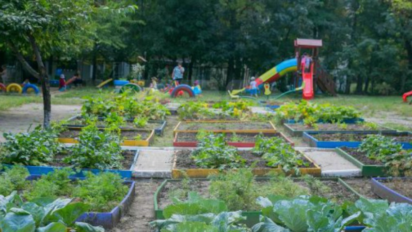 În curtea unei grădinițe din Capitală, copiii au răsădit legume