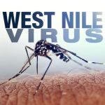 Foto: Virusul West Nile a ucis 12 oameni lângă Moldova