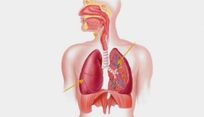 Acesta este organul care îmbătrânește cel mai repede