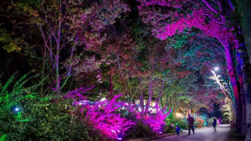 Foto: Aleea Colorată din parcul Valea Trandafirilor a fost vandalizată!