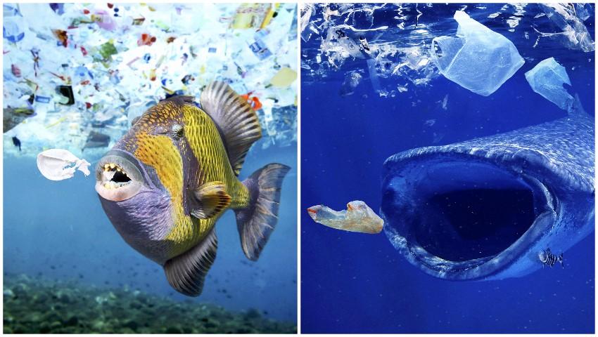Foto: Ți se frânge inima. 16 fotografii care arată cât de gravă este problema poluării mediului