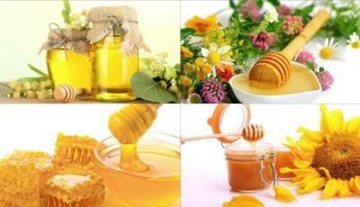 14 tipuri de miere și recomandările lor pentru diferite afecțiuni