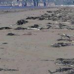 Foto: O sticlă de plastic adusă de valuri după 50 de ani, arată ca nouă. De ce a stârnit indignare?
