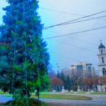 Foto: Primăria Capitalei întreabă chișinăuienii: Brad de crăciun natural sau artificial în PMAN?
