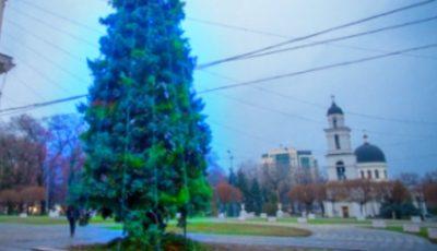 Primăria Capitalei întreabă chișinăuienii: Brad de crăciun natural sau artificial în PMAN?
