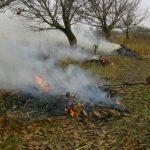Foto: Arderea este interzisă. Ce trebuie să faci cu frunzele și alte resturi vegetale?
