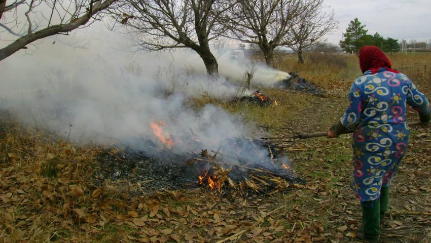 Arderea este interzisă. Ce trebuie să faci cu frunzele și alte resturi vegetale?