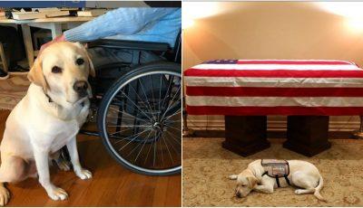 Emoționant! Fotografia cu câinele fostului președinte american George H.W. Bush, lânga sicriul acestuia, face înconjurul lumii