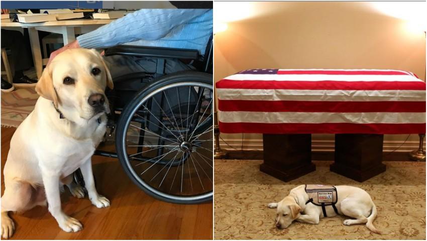 Foto: Emoționant! Fotografia cu câinele fostului președinte american George H.W. Bush, lânga sicriul acestuia, face înconjurul lumii