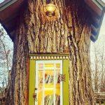 Foto: Inedit! Un copac de 100 de ani a fost transformat într-o mini-bibliotecă publică
