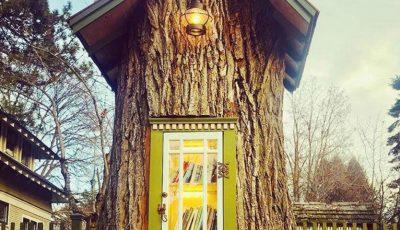 Inedit! Un copac de 100 de ani a fost transformat într-o mini-bibliotecă publică