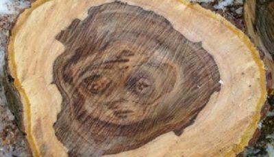 O minune a naturii! Chipul unei fetițe triste a apărut pe tulpina unui copac doborât