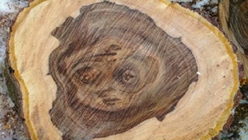 Foto: O minune a naturii! Chipul unei fetițe triste a apărut pe tulpina unui copac doborât