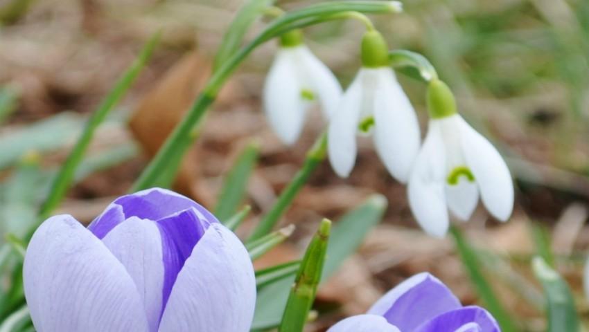 Foarte cald în acest weekend. Cum va fi vremea până la 1 martie?