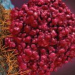 """Foto: Medic oncolog: ,,Ar trebui ca lumea să știe că peste jumătate din citostatice sunt extracte de plante"""""""