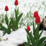 Foto: Iarna nu a plecat încă? În Moldova se așteaptă îngheț și ninsoare