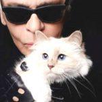 """Foto: Pisica lui Karl Lagerfeld ,,lansează"""" o linie de haine, în memoria creatorului de modă"""