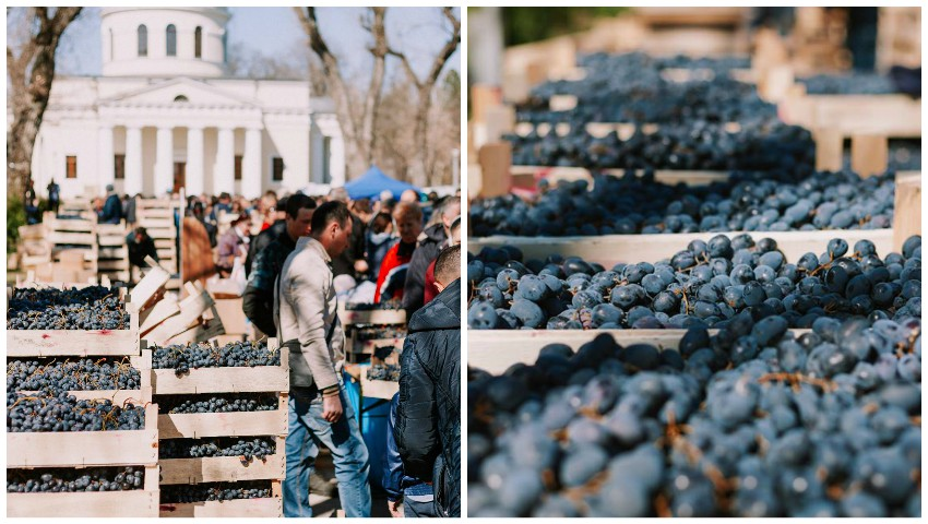 Foto: Târgul de struguri moldovenești, din Parcul Catedralei, va avea loc și duminica viitoare