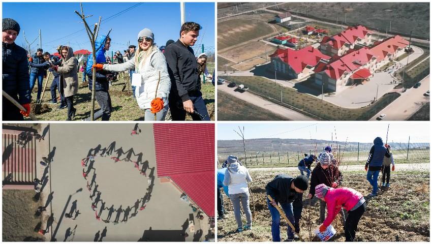 Foto: Un teren imens cu peste o mie de copaci a fost plantat în Cotul Morii. Cine sunt autorii inițiativei!