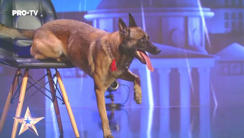 """Foto: Impresionant! Câinele Poliției de Frontieră a Republicii Moldova a primit patru de DA la ,,Românii au Talent""""! Vezi video"""