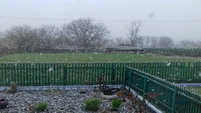 Foto: Cad fulgi de zăpadă în nordul Moldovei