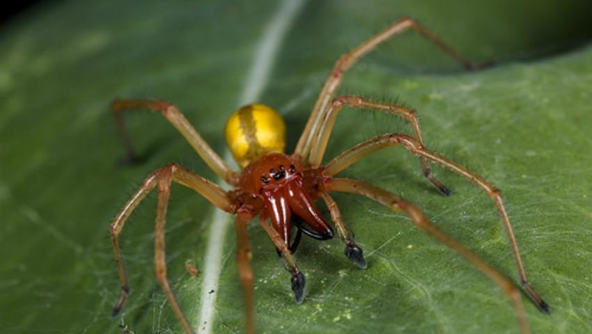 Foto: Unul dintre cei mai otrăvitori păianjeni din lume a fost descoperit și în Moldova. Avertismentul specialiștilor