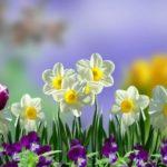 Foto: Tradiții de Florii. Ce este bine să faci în această zi!
