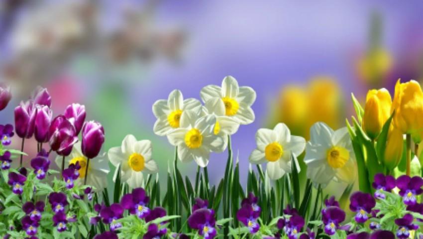 Tradiții de Florii. Ce este bine să faci în această zi!